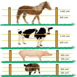 POLYTAPE ELECTRIC FENCE 250 MT 8 MM for Electric Fence Electrified Fences for animals wild boar dogs cows horses pigs hens Gemi Elettronica
